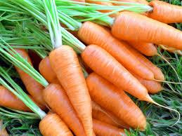 Много моркови с хвостиками