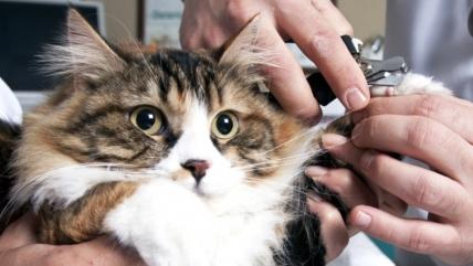 Как подстричь когти кошке: выбираем инструмент и следуем легким шагам