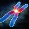 Сколько хромосом у человека? Меняется ли их количество?