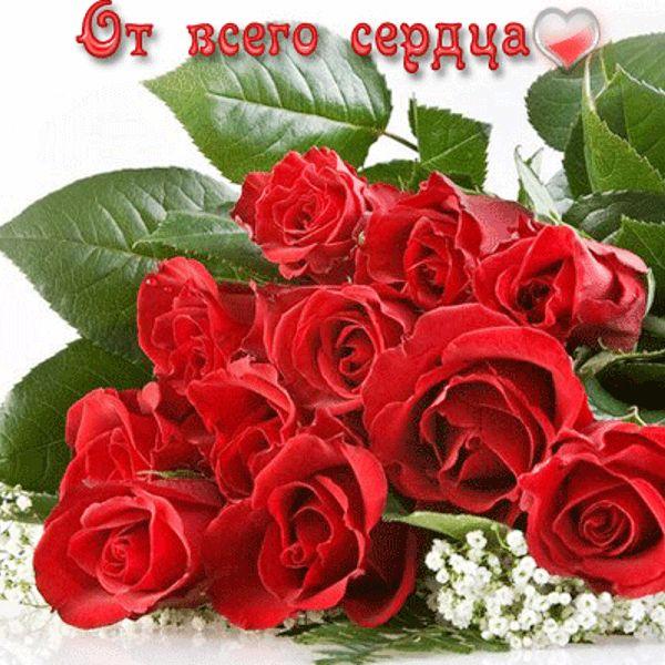 Фото шикарный букет роз