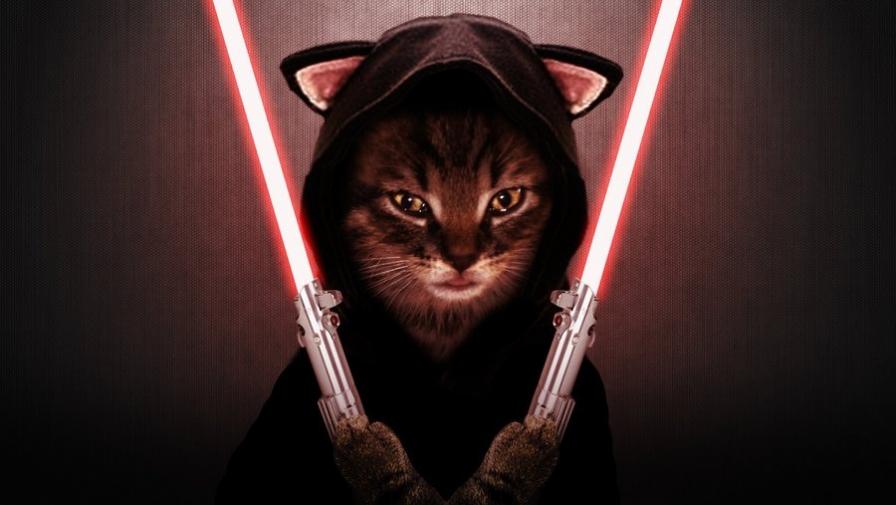Что делать, если кот хочет Вас убить