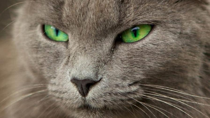 Почему нельзя смотреть в глаза кошке? Что будет?