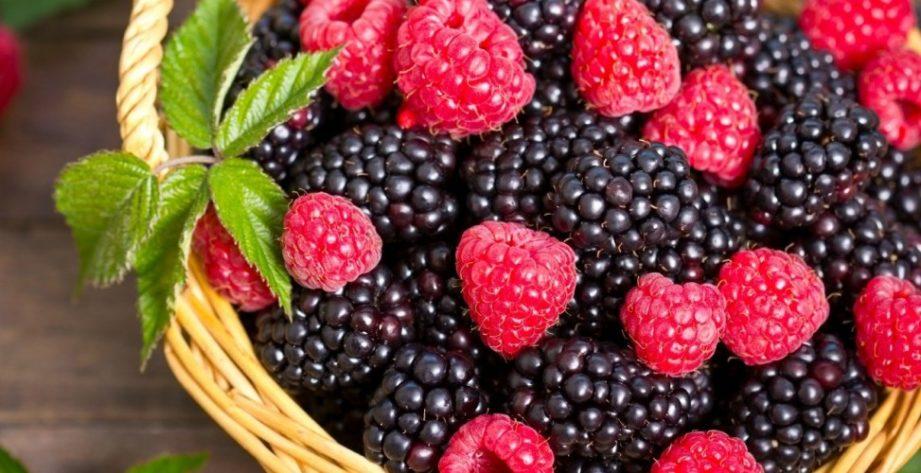 Польза и вред ежевики для здоровья человека, витаминная ценность