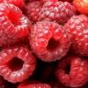 Польза и вред малины для здоровья человека. Всё об этой ягоде