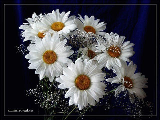 Гифки розы, красивые букеты цветов. Скачать можно здесь