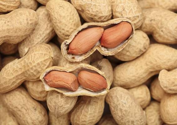 Польза арахиса для здоровья человека, вред и противопоказания