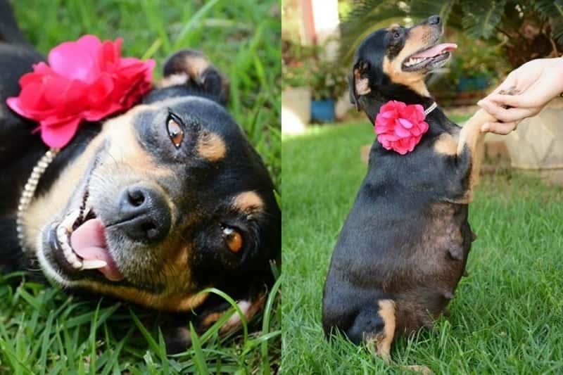 сколько дней носит собака щенков