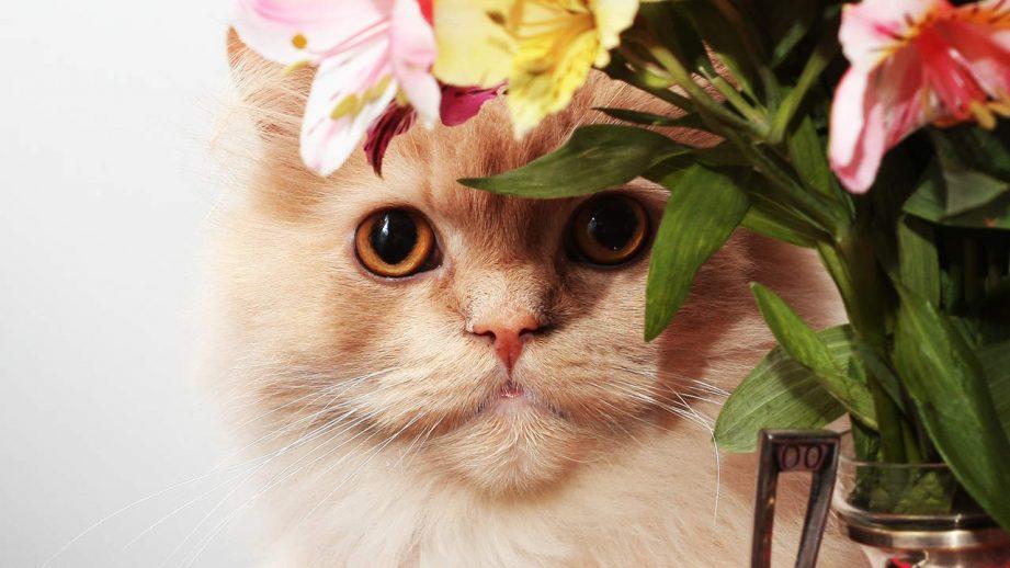 аллергия на кошек симптомы