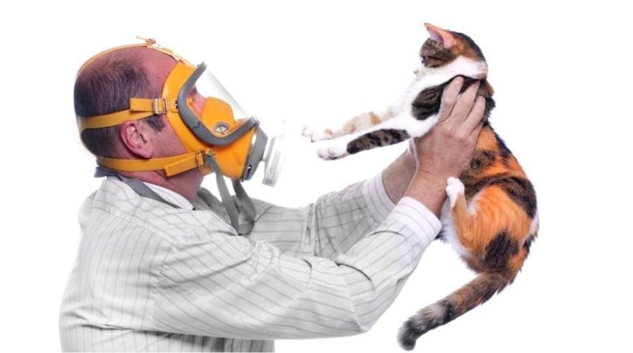Аллергия на кошек: симптомы, профилактика, гипоаллергенные породы