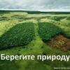 Картинки «Берегите природу» с надписями. Скачайте бесплатно!