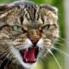 Бешенство у кошек: симптомы, профилактика, опасность для человека