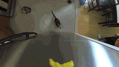 кот прыгает за едой