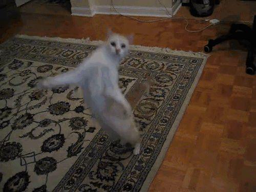 кот прогуливается