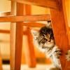 Что делать, если котенок гадит где попало: умные советы