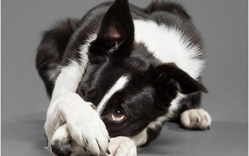 У собаки урчит в животе. Что делать, как помочь животному?