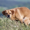 Что делать при запоре у собаки – первая помощь. Причины запора