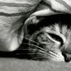 Чумка у кошек: симптомы заболевания, лечение, профилактика