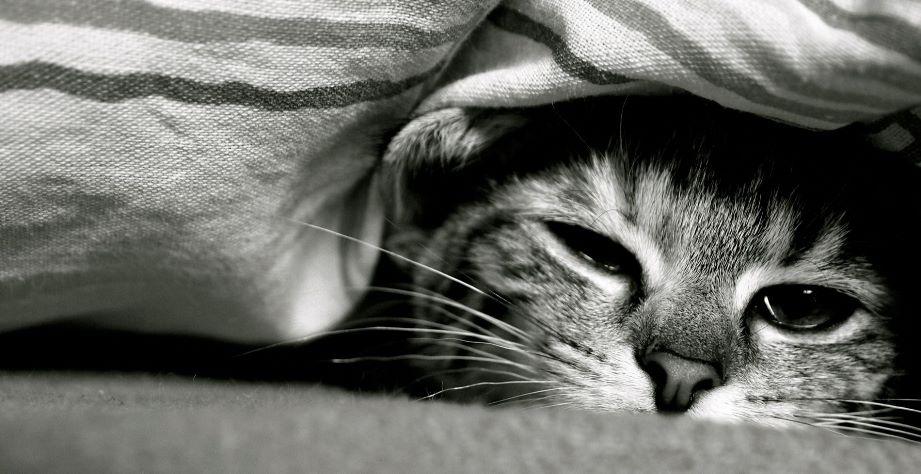 Чумка у кошек: симптомы заболевания, лечение и профилактика