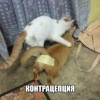 Подборка веселых фоток про котов