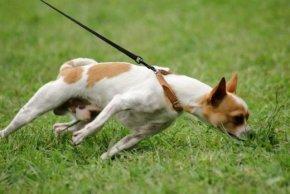 Чем травят собак догхантеры. Как действовать при отравлении