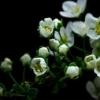 Гифки «цветы». Большая подборка GIF анимации с цветами.