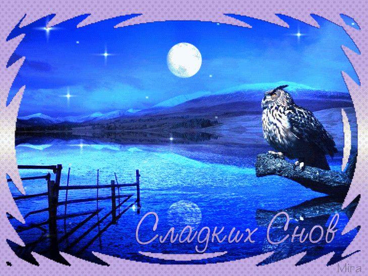 Гифка Спокойной ночи с совой