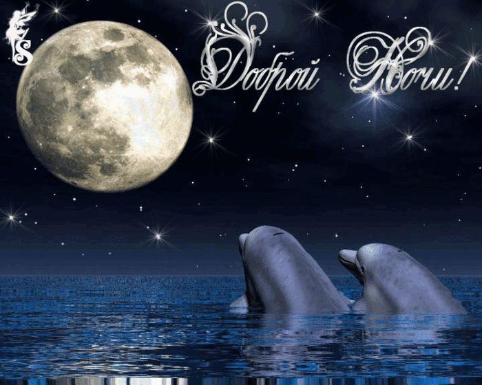 Гифка Спокойной ночи с дельфинами