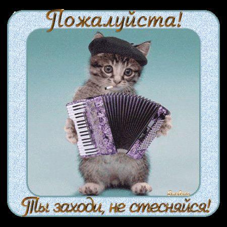 гифка пожалуйста с котом играющим на гармошке