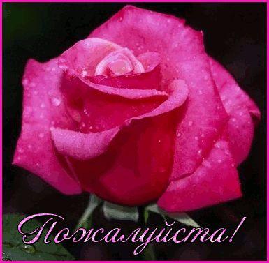 гифка пожалуйста с розой красивой