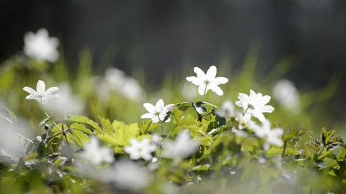 гифка полевые цветы