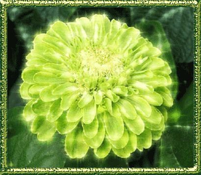 гифка зеленый цветок