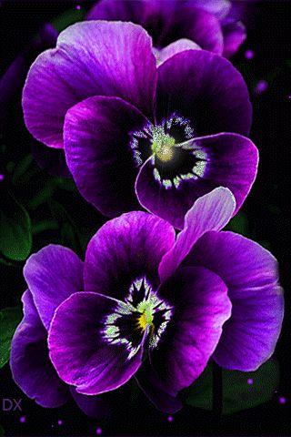Гифка фиолетовые цветы