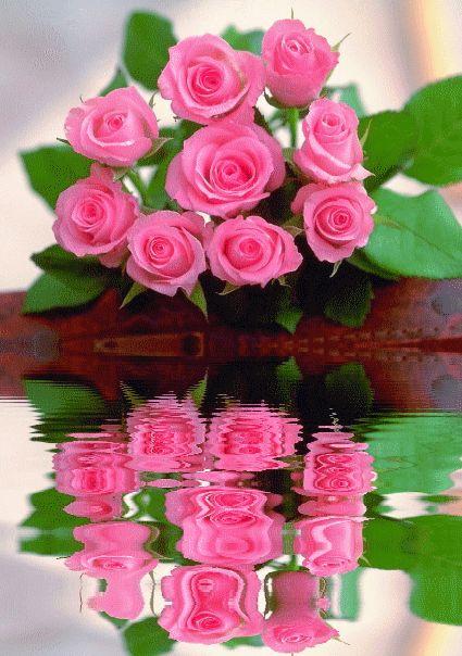 гифка розы отражаются в воде