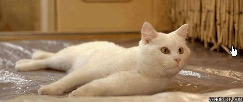 Прикольная гифка для Стима кот с курсором