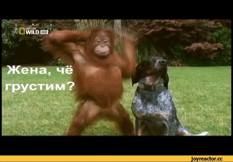 Гифка пятница с собакой и обезьяной