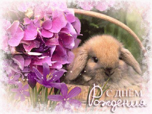 гифка с днем рождения поздравляет кролик