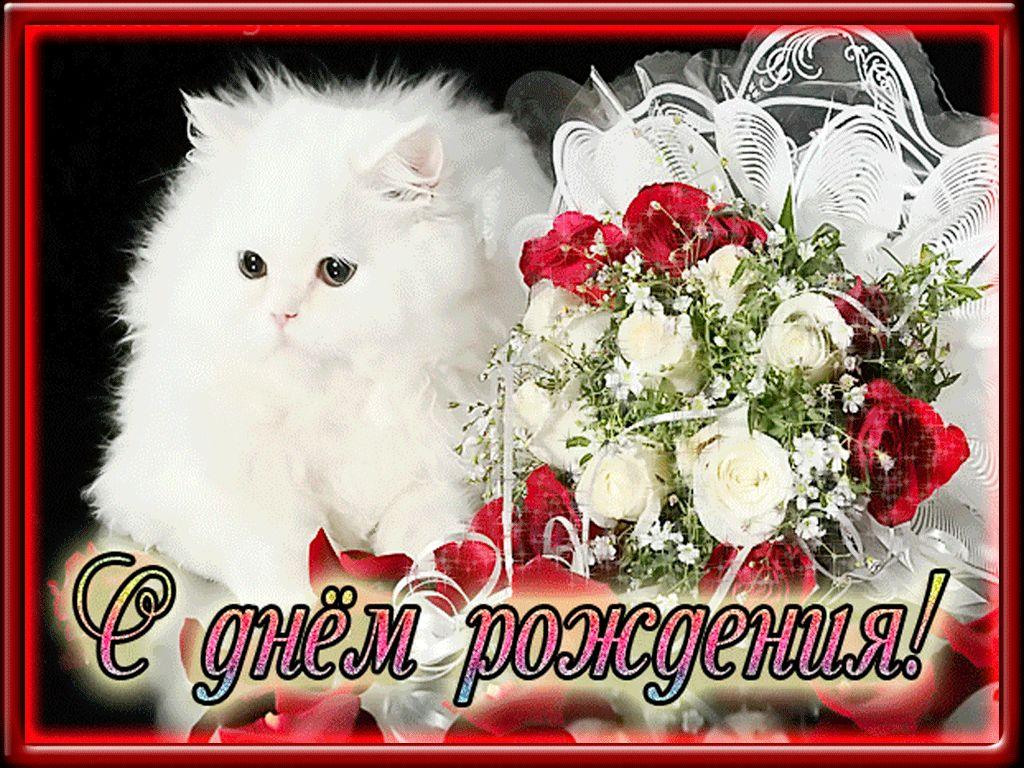 котик, цветы и надпись с днем рождения
