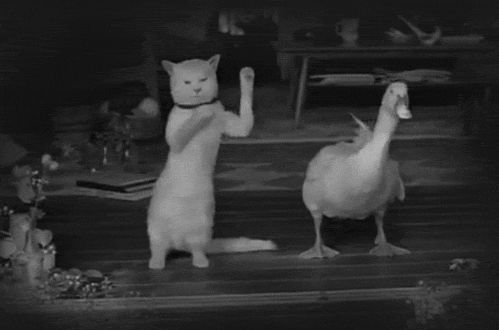 Гифка танцуют кот и гусь