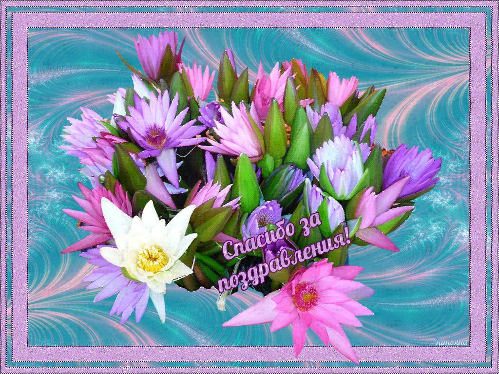 цветы спасибо за поздравление