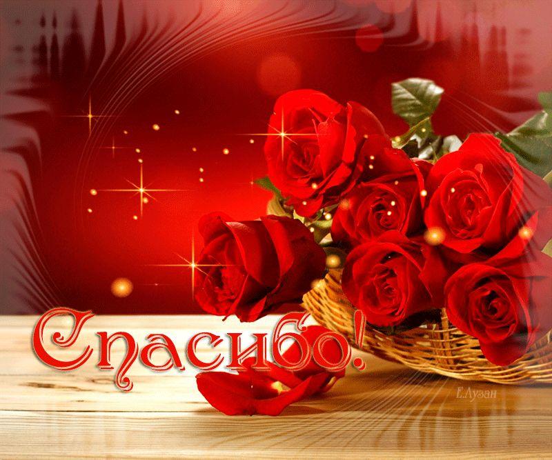 розы красный фон спасибо