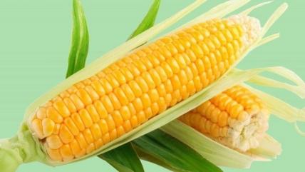 Гликемический индекс вареной кукурузы, свежей, кукурузных хлопьев