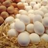 Гликемический индекс яйца вареного, витамины, польза и вред