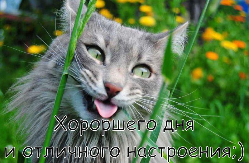 """Картинка """"Хорошего дня и отличного настроения"""" с котом, жующим траву"""