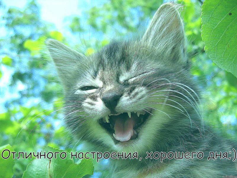 """Картинка """"Хорошего дня и отличного настроения"""" с котёнком в зелени"""