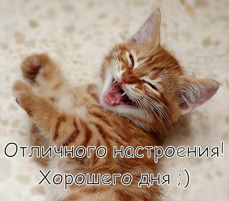 """Картинка """"Хорошего дня и отличного настроения"""" с котёнком"""