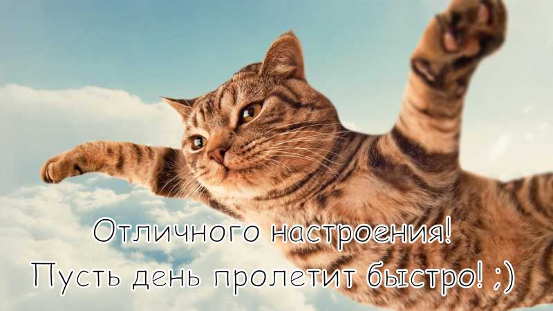 """Картинка """"Хорошего дня и отличного настроения"""" с летающим котом"""