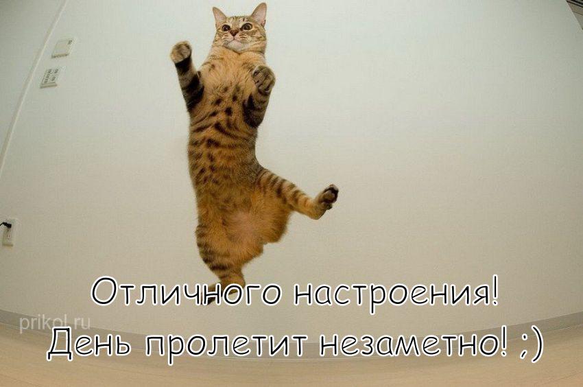"""Картинка """"Хорошего дня и отличного настроения"""" от летающего котика"""