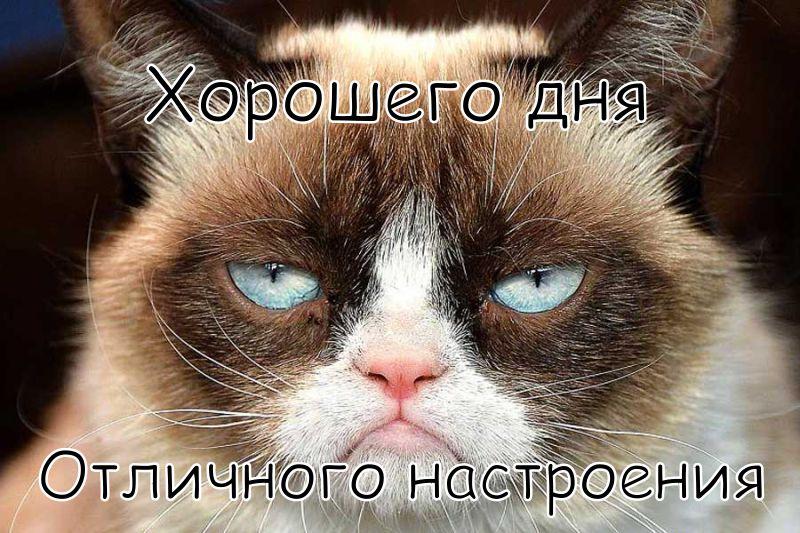 """Картинка """"Хорошего дня и отличного настроения"""" с сердитым котиком"""