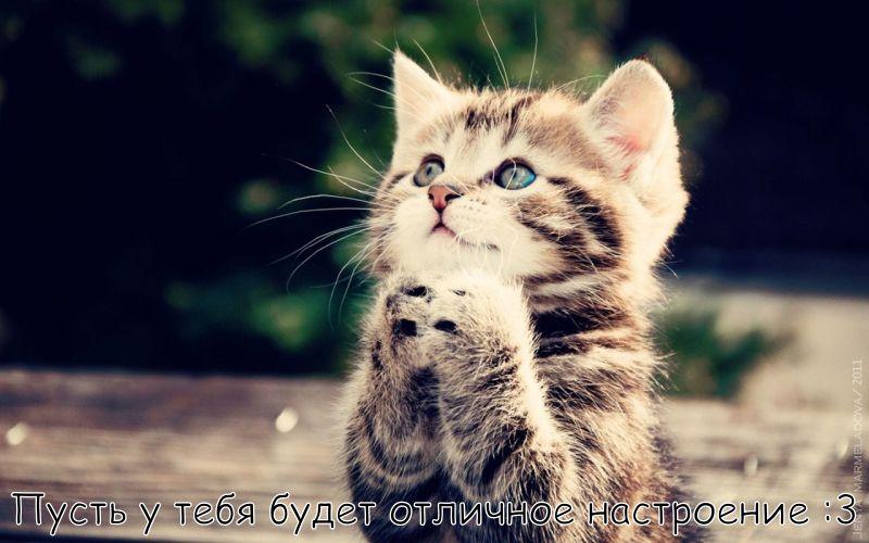 """Картинка """"Хорошего дня и отличного настроения"""" с котиком"""