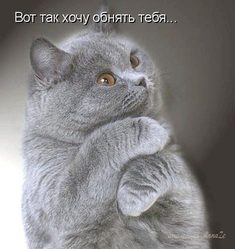 """Гифки """"Хочу к тебе"""". Коллекция GIF анимации для любимых"""